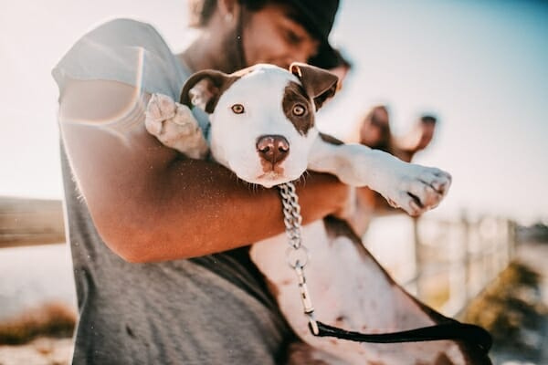 Your guide to adopting a shelter dog