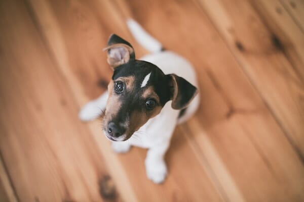 How to become a pet foster carer