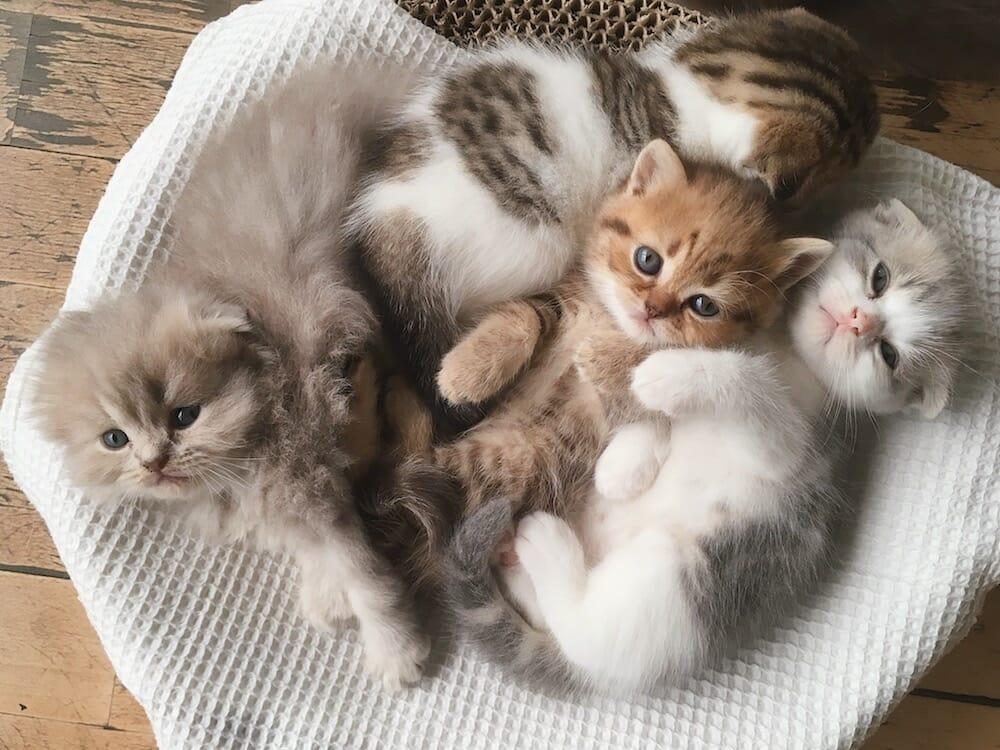 What is Kitten Season?