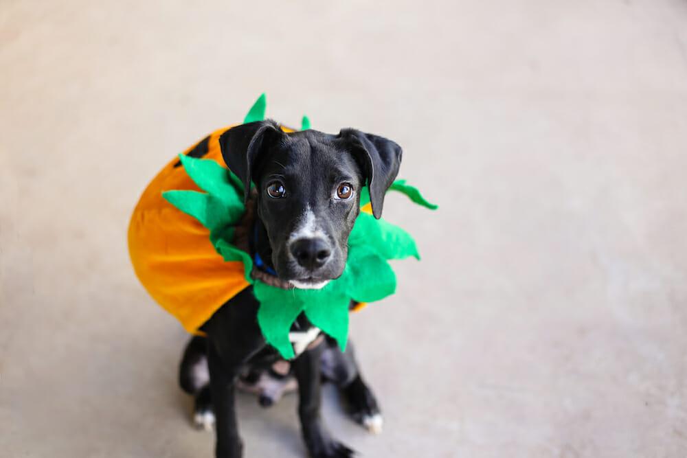 Understanding the Basics of Animal Shelter Fundraising