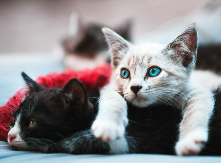 10 Purr-fect Animal Shelter Items for Cat Lovers