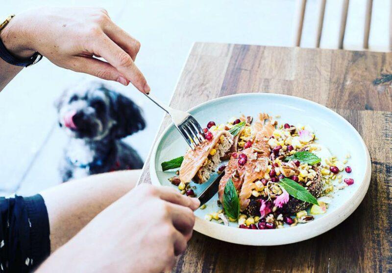Sydney's Pet-Friendly Bars & Cafes