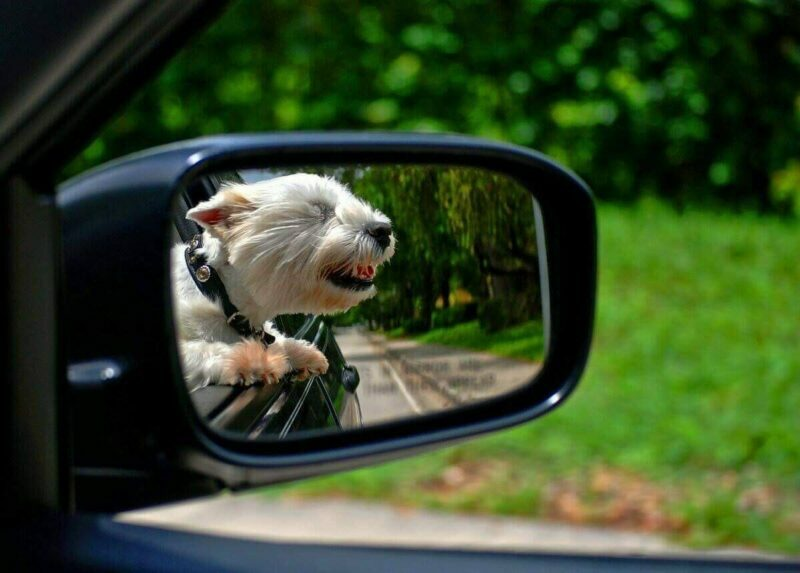 The Ultimate Pet Travel Checklist