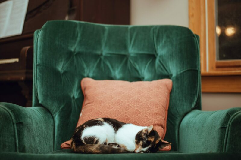 How to Find (and Enjoy) Pet-Friendly Holiday Homes