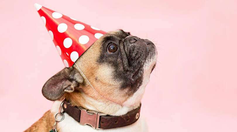 Your Complete Guide to Throwing the Best Pet Party