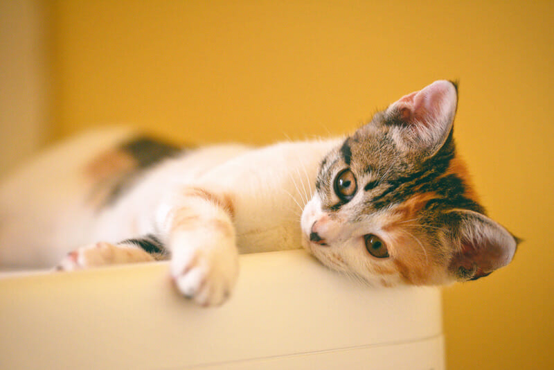 Things You Should Know Before Adopting a Cat