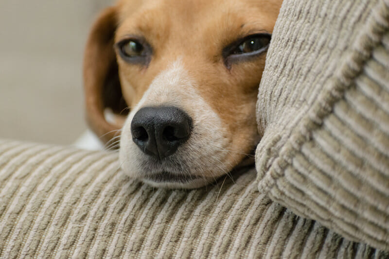 Can You Adopt a Dog When You Work Full Time?