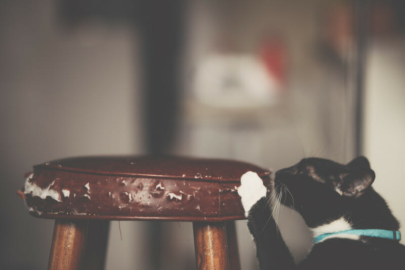 How to Stop Your Cat from Scratching Furniture