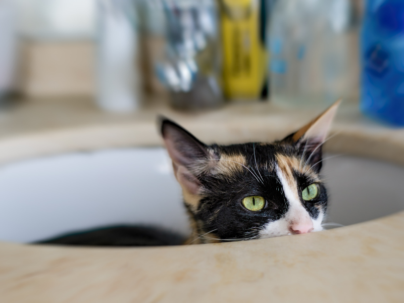5 Reasons Why Your Cat is Peeing Everywhere (And How to Avoid It From Happening Again!)