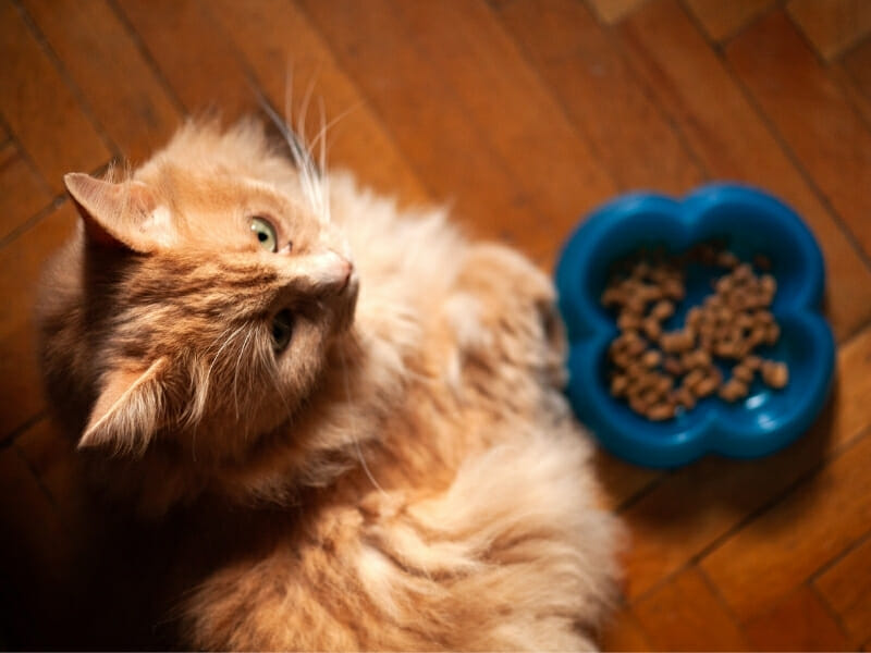 7 Ways to Help Your Cat Gain Weight