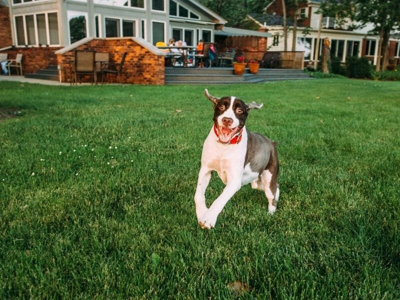 How to Make Your Backyard Pet-Friendly