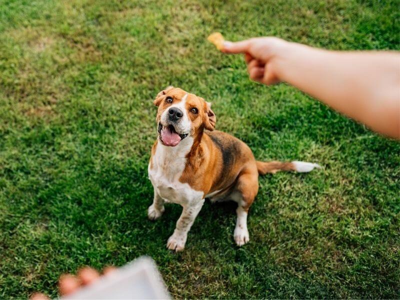 Homemade Dog Training Treats: 10 Healthy Recipes to Try
