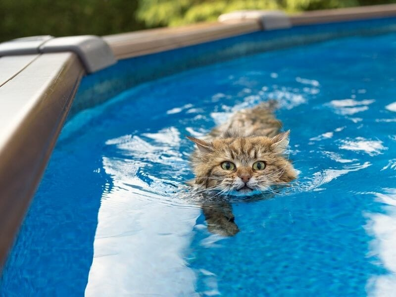 The Truth about Cats and Water