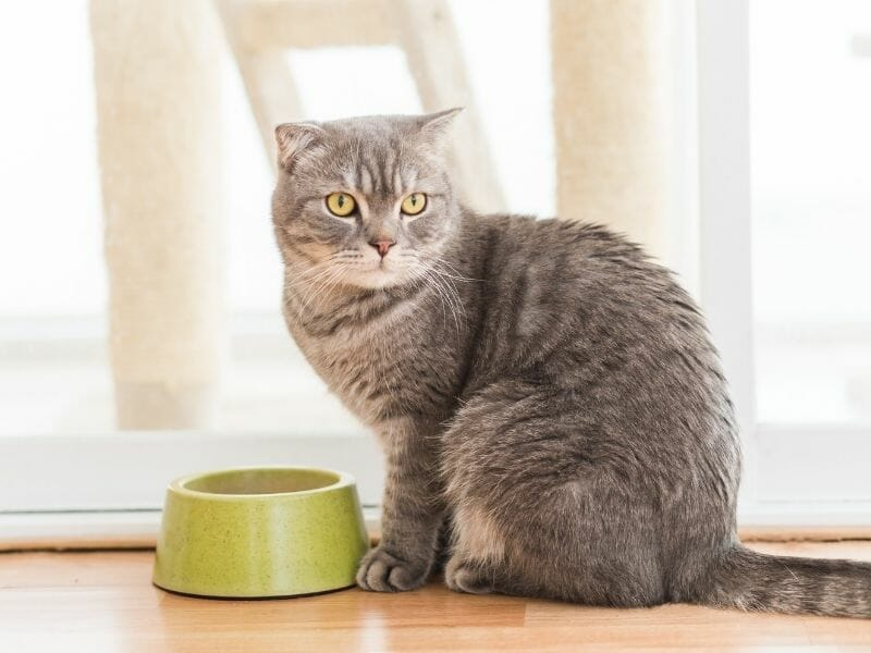 The Best Food to Feed an Elderly Cat
