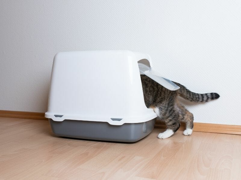 Should I Get a Self-Cleaning Litter Box for My Cat?