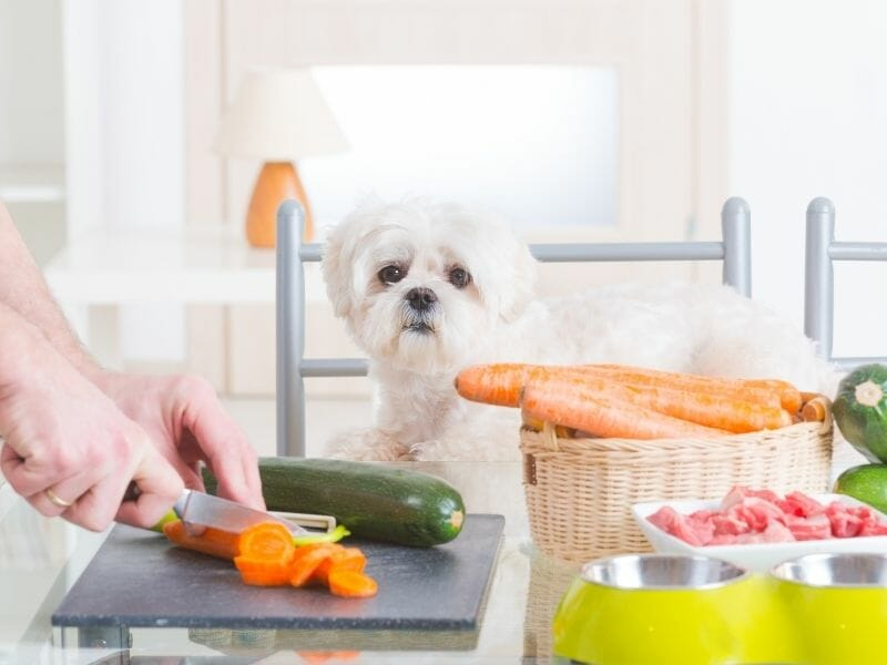 Best Human Food for Puppies