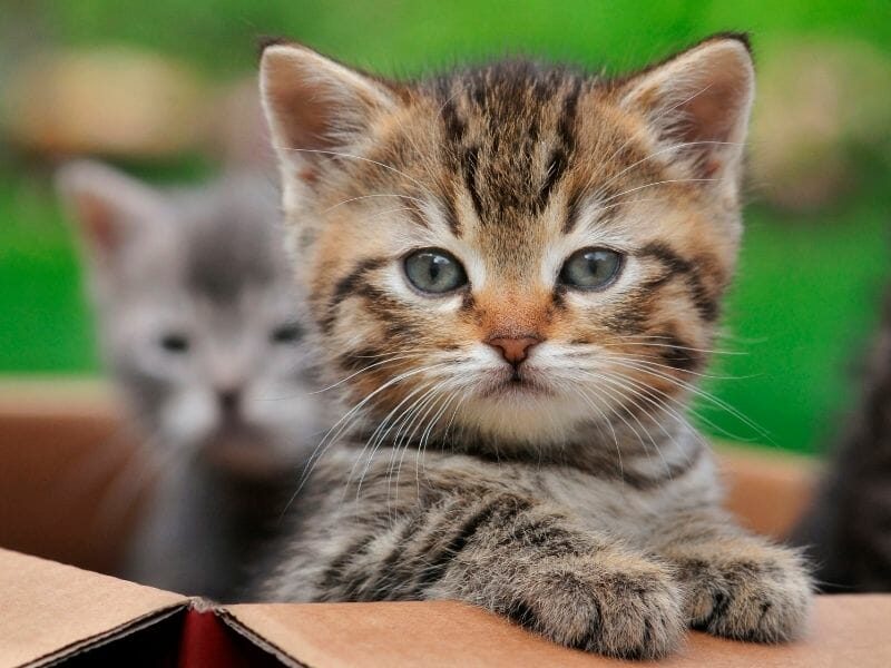 Best Soft Food for Kittens