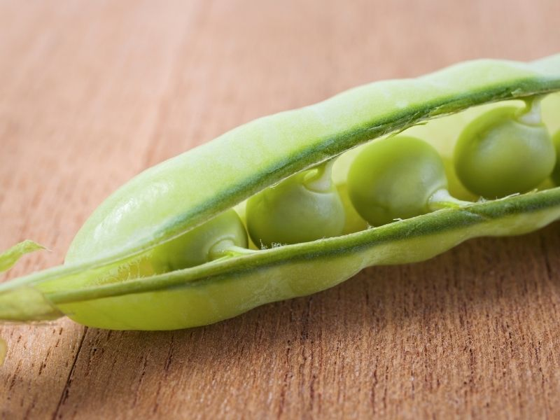 Can Cats Eat Peas?