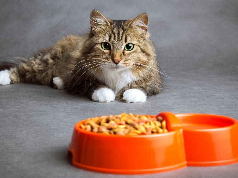 Why is my cat throwing up white foam and not eating? [7 possible reasons]
