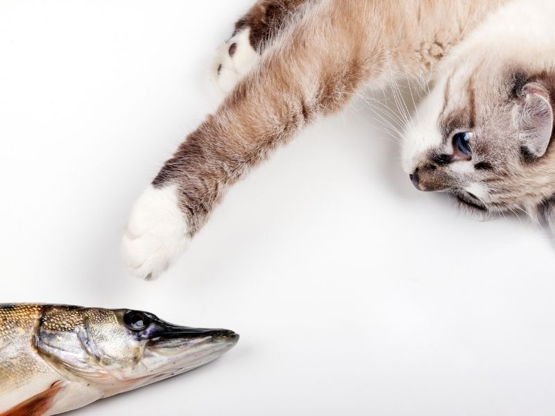 Which seafood products can your cat eat?
