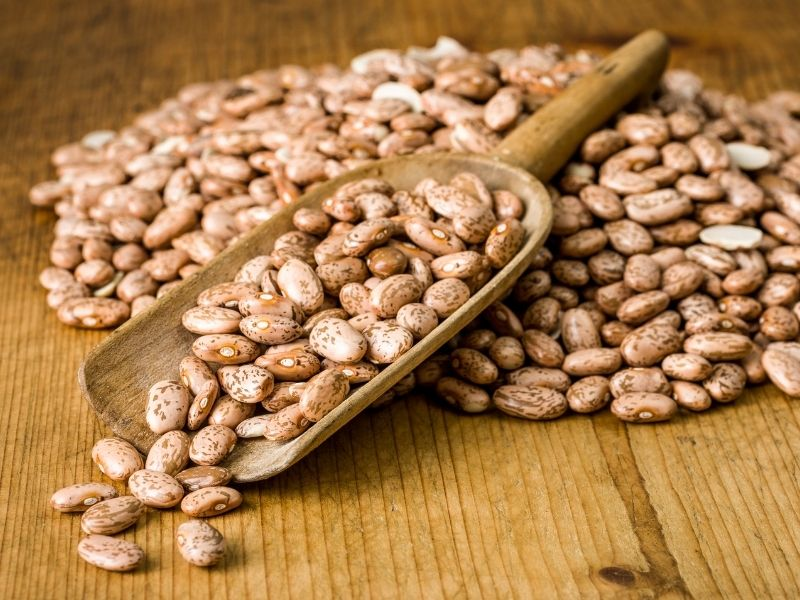 Can Cats Eat Pinto Beans?